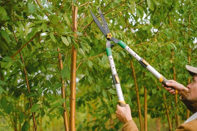 dlouhé zahradnické nůžky v akci